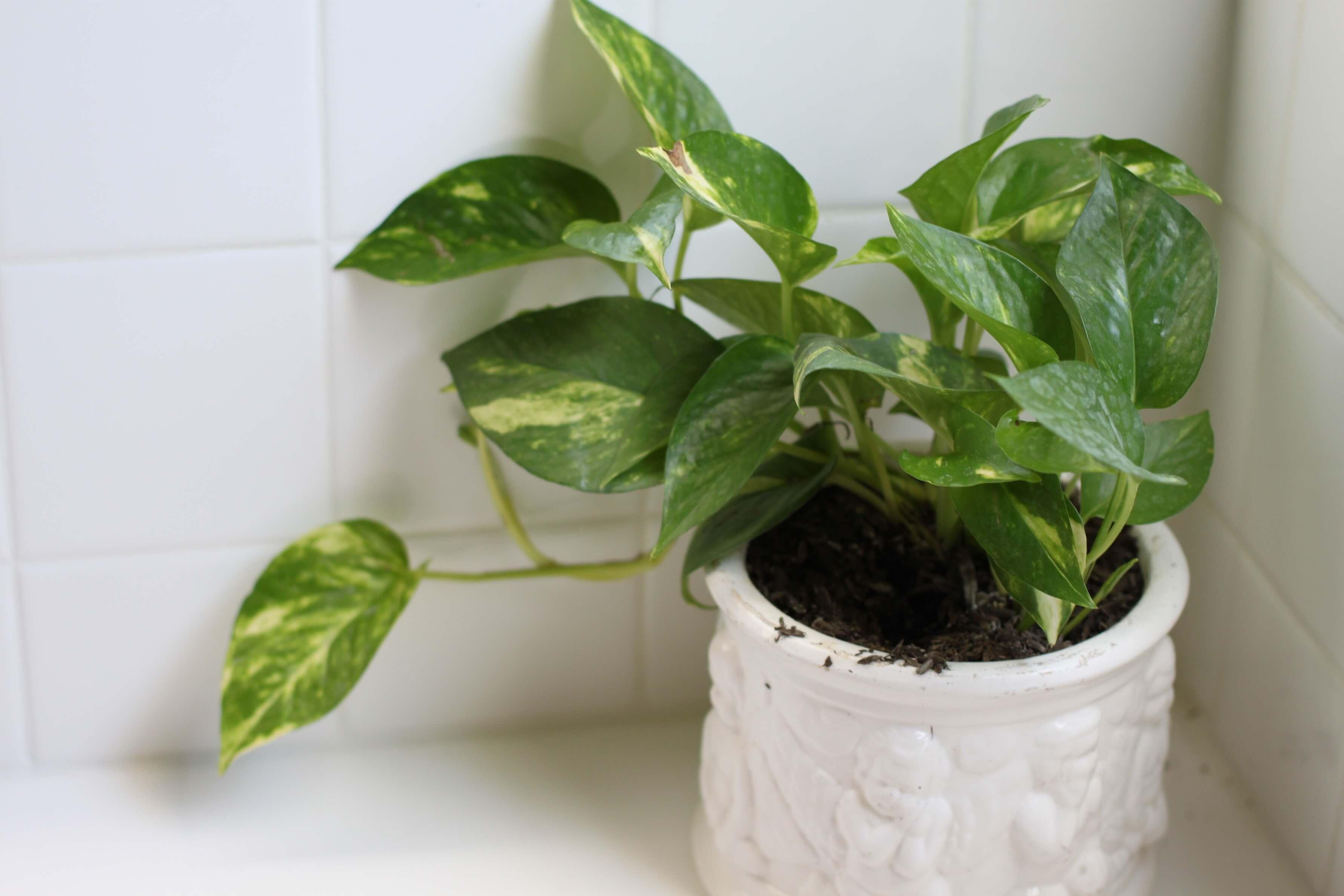 Planten Slaapkamer Baby : Planten voor slaapkamer. great with planten voor slaapkamer. simple