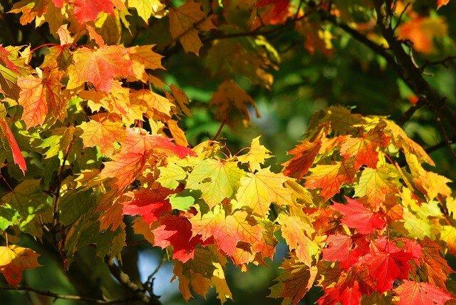 Herfst in huis halen tips inspiratie wiki wonen