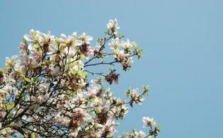 Haal de lente in huis – Tips & Inspiratie