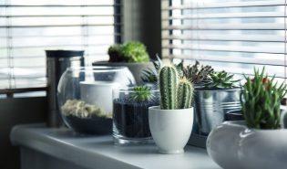 Planten in een zwart wit interieur
