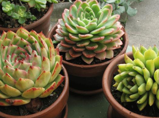Planten voor binnen