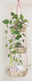 Hangplant voor in de badkamer