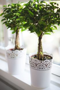 Bloemen en planten als accessoires woonkamer