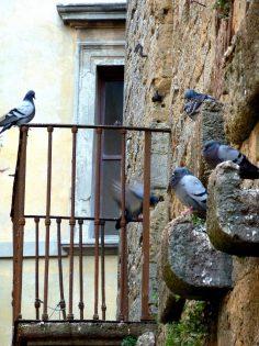 Duivenoverlast - Duiven verjagen balkon