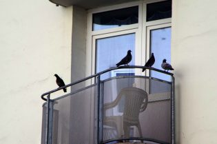 Duivenoverlast balkon