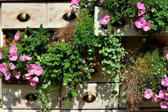 Winterharde planten voor het balkon, tuin of dakterras