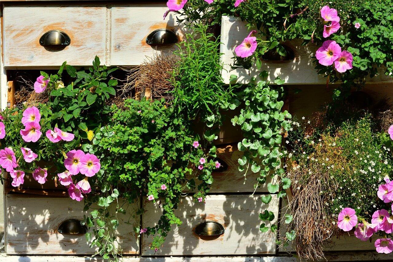 Balkon winterharde planten