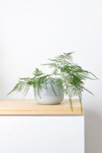 Minimalistisch interieur plant